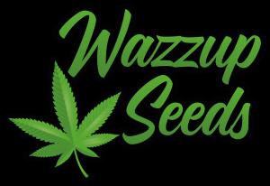 Wazzup Seeds